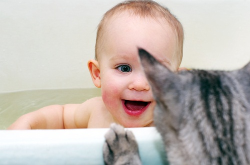 How to Prepare Your Cat for Baby